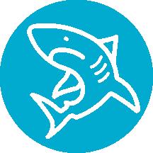 Asset-10activity-shark
